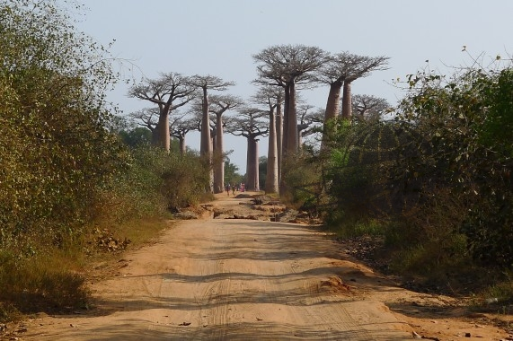 Paysage Baboab Madagascar