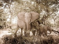 Travel Photography - Botswana Moremi Game Reserve 0/0 | axetrip.com